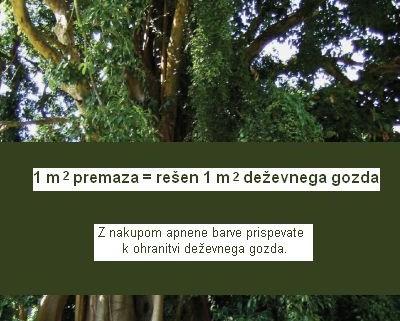 Kreidezeitov projekt deževni gozd