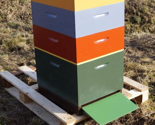 Ekološka zaščita panjev z oljno barvo